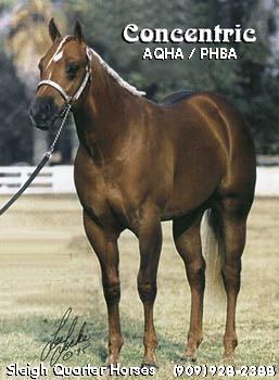 Sleigh Quarter Horses